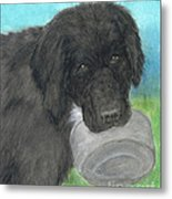Hungry Newfoundland Dog Canine Animal Pets Art Metal Print