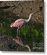 Hungry Pink Spoonbill Metal Print