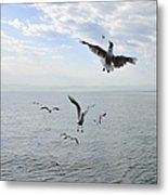 Hungry Seagulls Flying In The Air Metal Print