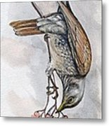 hungry Thrush 1 Metal Print