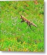 Hunting Fox Metal Print