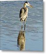 Hunting Great Blue Heron Metal Print