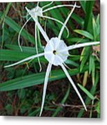 Hurricane Lilly Metal Print