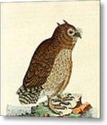Hutum Owl  Metal Print