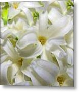 Hyacinth Love 3 Metal Print