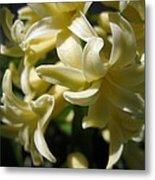 Hyacinth Named City Of Haarlem Metal Print