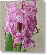 Hyacinth Pink Metal Print