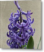 Hyacinth Purple Metal Print