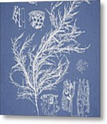 Hyalosiphonia Caespitosa Okamura Metal Print by Aged Pixel