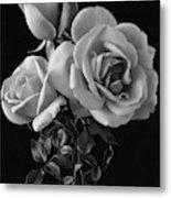 Hybrid Tea California Roses Metal Print