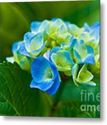 Hydrangea Bouquet Metal Print