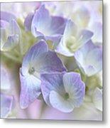 Hydrangea Floral Macro Metal Print
