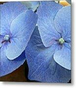 Hydrangea Flower Set Metal Print