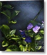 Hydrangea Violet-blue Metal Print