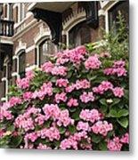 Hydrangeas In Holland Metal Print