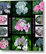 Hydrangeas On Parade Metal Print