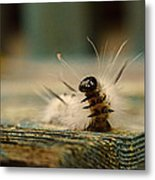 I Am A Caterpillar Metal Print