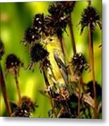 I Am A Flower Stalk Do You See Me Metal Print