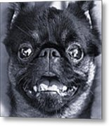 I Am Cute And I Know It Metal Print