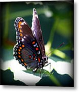 I Butterfly Metal Print
