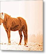 I Came Out Of Nothing To Meet You Here In Nomansland  Metal Print