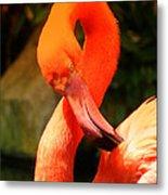 I Can Count To 8 - Flamingo Metal Print