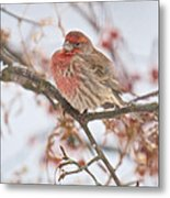 I Cannot Believe It Is So Cold Metal Print