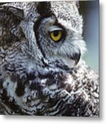 I Do Not Give A Hoot Metal Print