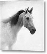 I Dream Of Horses Metal Print by Betty LaRue