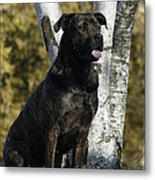 I Have Been Such A Good Dog Metal Print
