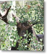 I Have Eyes For You Metal Print