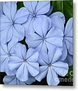 I Love Blue Flowers Metal Print