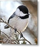 I May Be Tiny But You Should See Me Fly Metal Print