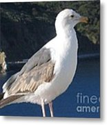I Posed For You Now Feed Me Please Metal Print