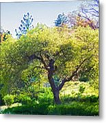 I See Soul And Expression - Julian California Oakscape Metal Print