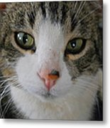 I See You Cat - Square Metal Print
