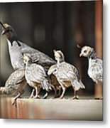 I Think I Can Fly  Metal Print