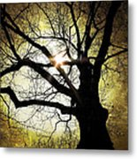 I Think I Shall Never See A Poem As Lovely As A Tree... Metal Print