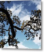 I Touch The Sky Metal Print by Laurie Search