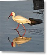 Ibis In Reflection Metal Print