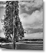 Ice Coated Tree Metal Print