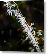 Ice Crystals In Morning Sun Metal Print