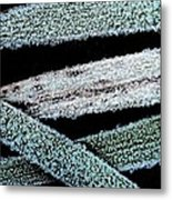 Ice Crystals Metal Print by Shirley Sirois