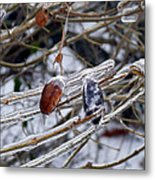 Ice Incased Leaves Metal Print