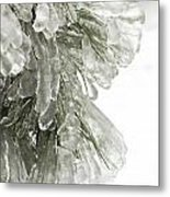 Ice On Pine Branches Metal Print by Blink Images