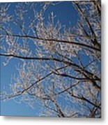Ice Storm Branches Metal Print