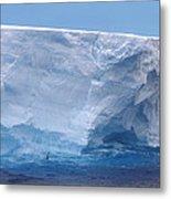 Iceberg With Cape Petrel Metal Print