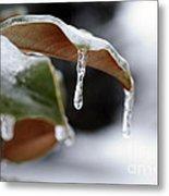 Iced Magnolia Metal Print