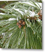 Iced Over Pine Cones Metal Print