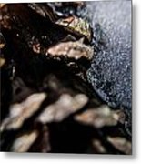 Iced Pinecone Metal Print